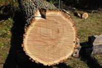 photo: Saw Log pattern. Photo by Eli Sagor