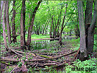 Photo of lowland deciduous forest.