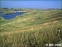 Prairie habitat.