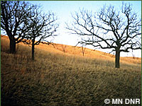 Photo of savanna.