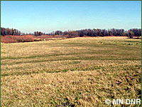 Photo of surrogate grassland.
