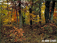 Photo of upland deciduous forest, oak.
