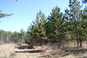 Bemis Hill Trails