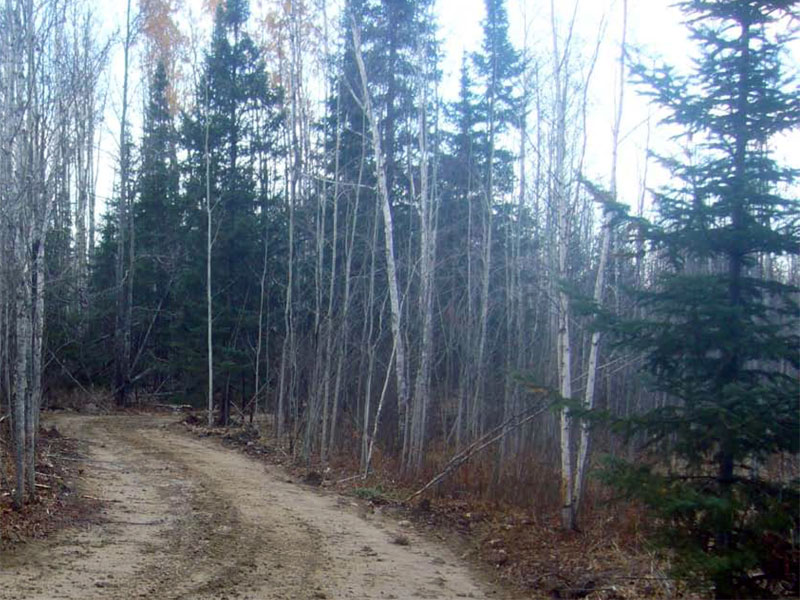 Chisholm Trail