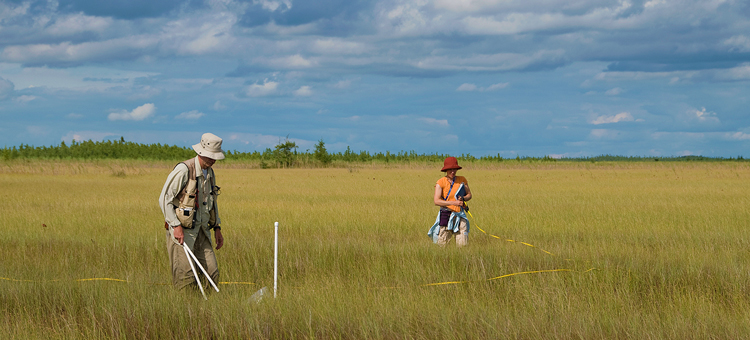 Plant survey in the Red Lake Peatland SNA.