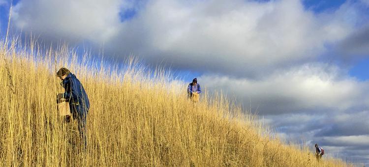 Volunteers collecting prairie seed on Lost Valley Prairie SNA, Visit the Wild Places