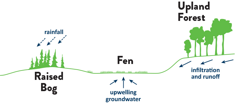 Illustration of water flow in fens from ground water; in bogs from rain water, and upland forest from infiltration and runoff.