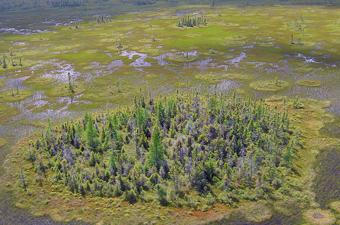 Ovoid island in a raised bog