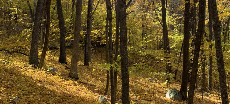 Fall in Avon Hills Forest