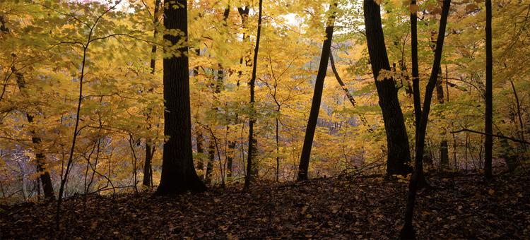 Fall in Wood-Rill