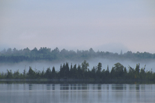 Fog over Lost Lake Peatland SNA