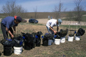 Stewards preparing tree seedlings for planting during a Volunteer Project