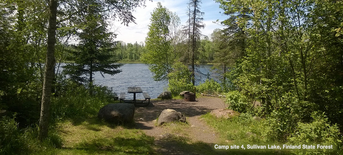 view of lake through pine trees with pinic table