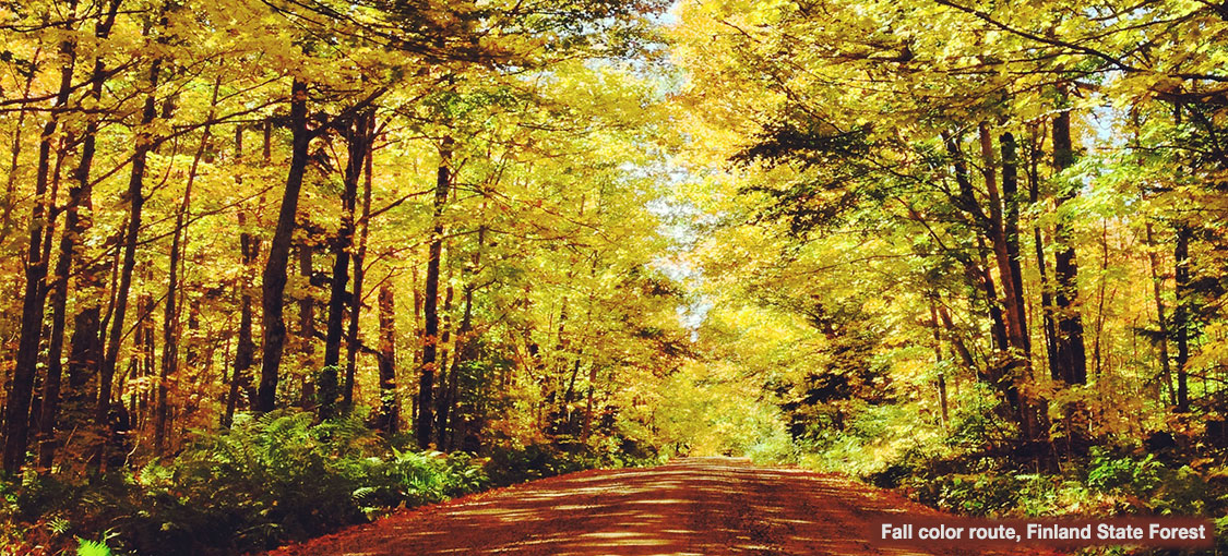 tree lined dirt road in the fall