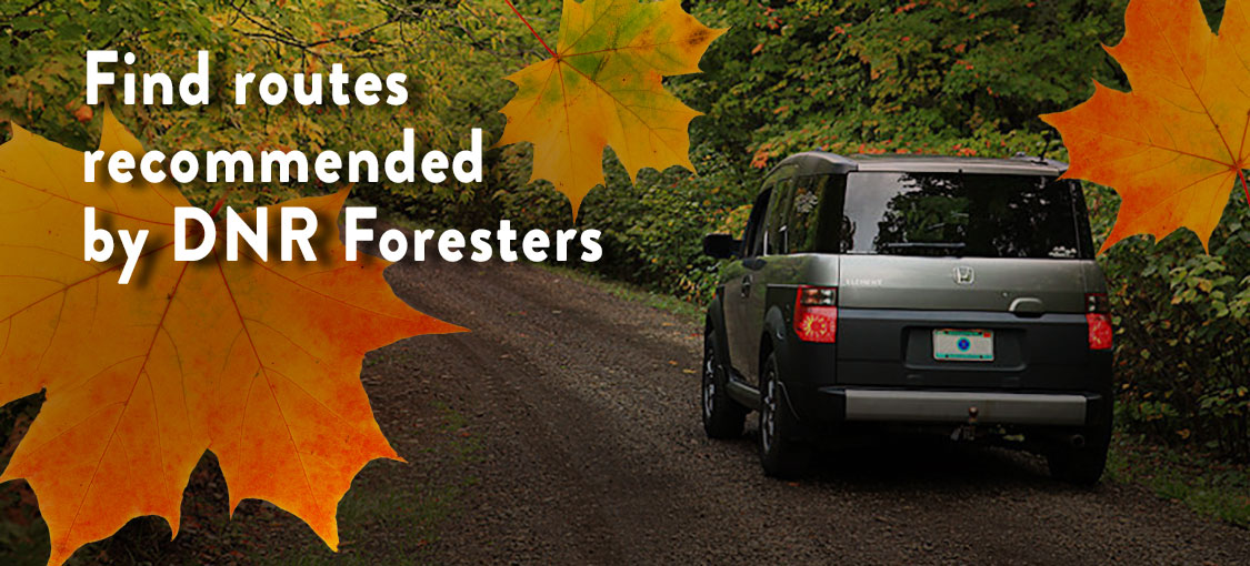 Car driving along a forest road in Grand Portage State Forest.