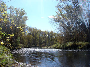 fall sunnyday with a river and tree empty of leaves