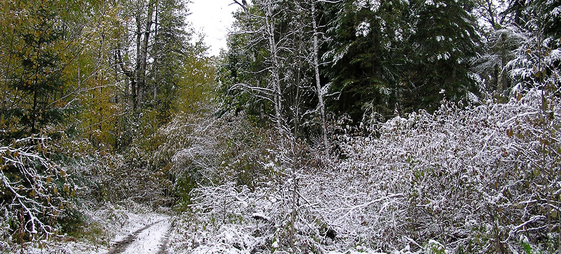 tree lined atv trail with small snow cover