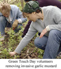 Green Touch Day volunteers help manage an invasive mustard garlic infestation at their local state park