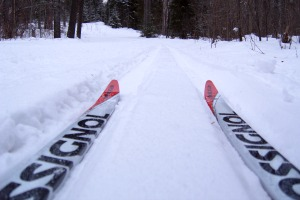 Photo of a the tips of a visitor's skis on a park trail.