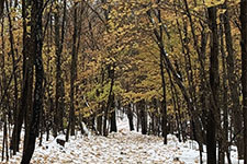 Frontenac State Park in late fall. Photo by Rob Gale.