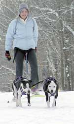 Photo of a woman and her two dogs skijoring