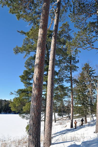 Snowshoeing at Itasca State Park