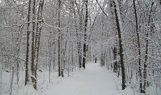 Wild River Winter Trail