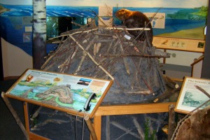 Photo of the interior of the visitor center, with a glimps of a beaver lodge exhibit.