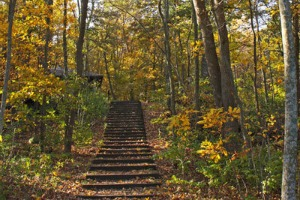 Photo of fall scenery along the Big Woods Trail.