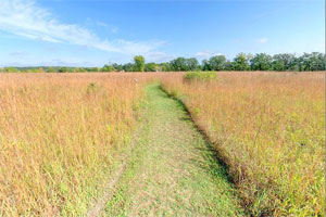 Photo of Afton State Park's half-mile self-guided prairie restoration trail, flanked by native Big Bluestem grasses.