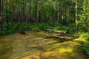 Photo of a shaded picnic area offers the perfect place to enjoy a meal with family and friends.
