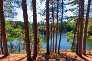 Photo of Norberg Lake in the distance, beyond a stand of tall pines.