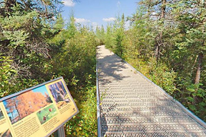 Photo of the Big Bog boardwalk, with visitor exhibits along the way.