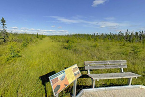 Photo of a sunny place to rest on the boardwalk trail.