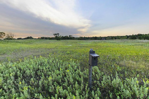 Photo of an old farm field now restored to tall grass prairie.