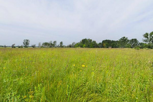 Photo of the prairie landscape which contains more than 250 species of wildflowers and grasses including some plants now rare in Minnesota.