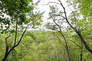 Photo of a scenic view above the Whitewater River as it flows through the forested valley below.
