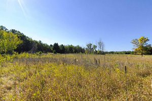 Photo of a prairie restoration site within the park.