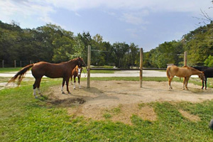 Photo of equestrian campsites, that feature electricity hook-ups and a pull-through design for horseback riding campers.