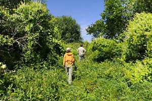 Photo of visitors hiking through a variety of habitats ranging from open hardwoods to inland grassy marshes.