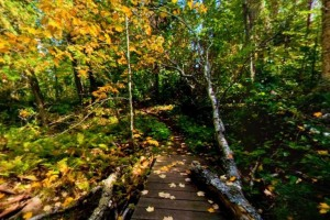 Photo of autumn colors along the Misquah Trail.