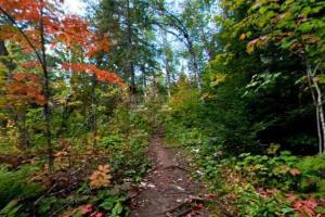 Photo of fall foliage along the Humpback Trail.