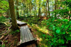 Photo of a wooden boardwalk running through woods.