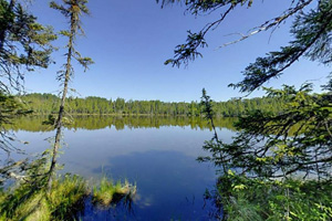 Photo of the the tamaracks around Big Bog Lake.