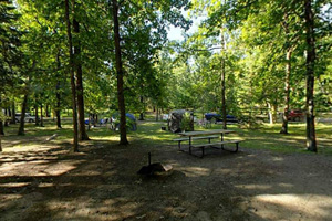 Photo of the Pine Lane campground, featuring shady sites.
