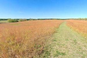 Photo of restored grasslands of Prairie Pothole Trail.