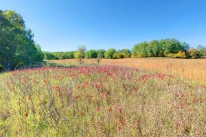 Photo of wildflowers blooming in the restored prairie along Prairie Pothole Trail.