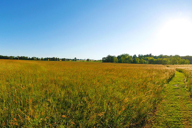 Photo of the expanse of restored prairie.