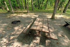 Photo of picnic tables in the wooded picnic area.