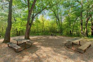 Photo of a wide open spot amidst the forest houses the Oak Hill Group Camp.